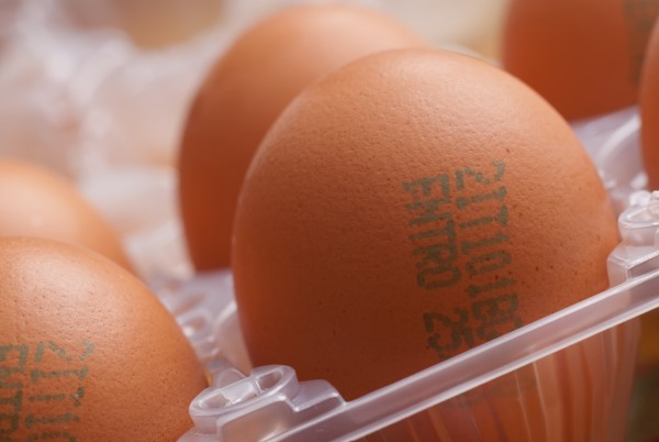 Egg Coding